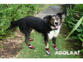 Neo-Paws offer high-performance functional and cheap shoes for dogs
