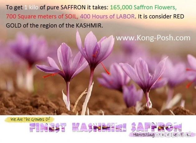 why-saffron-is-the-most-expensive-herb-spice-in-the-world-big-0