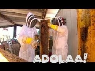 Killer bee live removal and Beehive removal at CA