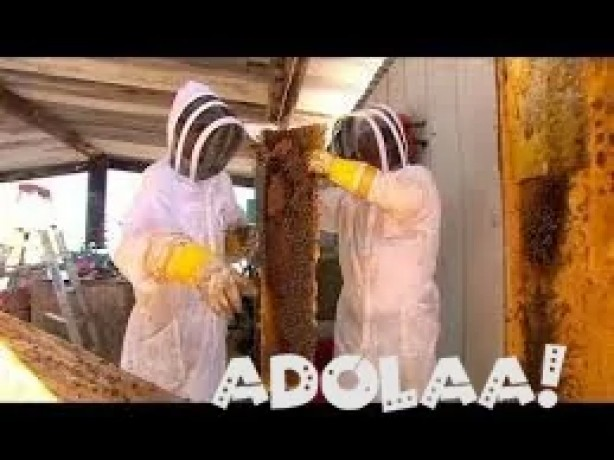 killer-bee-live-removal-and-beehive-removal-at-ca-big-0