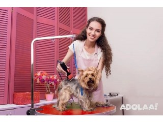 Best Dog Grooming Course