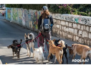 Enamor the worldwide presence through our On-demand dog walking app
