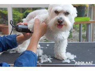 Start Your Own Dog Grooming Business