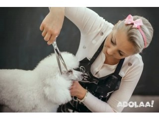 Get Affordable Dog Grooming Training