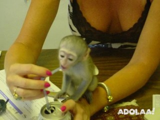 Monkeys and other exotic pets for sale