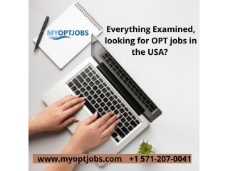 Everything Examined, looking for OPT jobs in the USA?