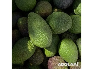 Quality Avocados at Your Doorstep