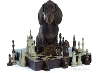 The Brain Training for Dogs